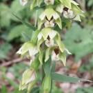 Orchidée des jardins
