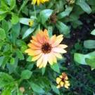 Un jardin cultivé...